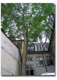 Beskæring af vanskelige træer