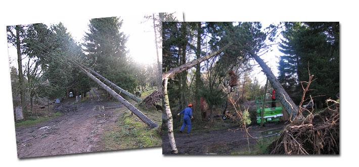 Skadeservice ved væltede træer